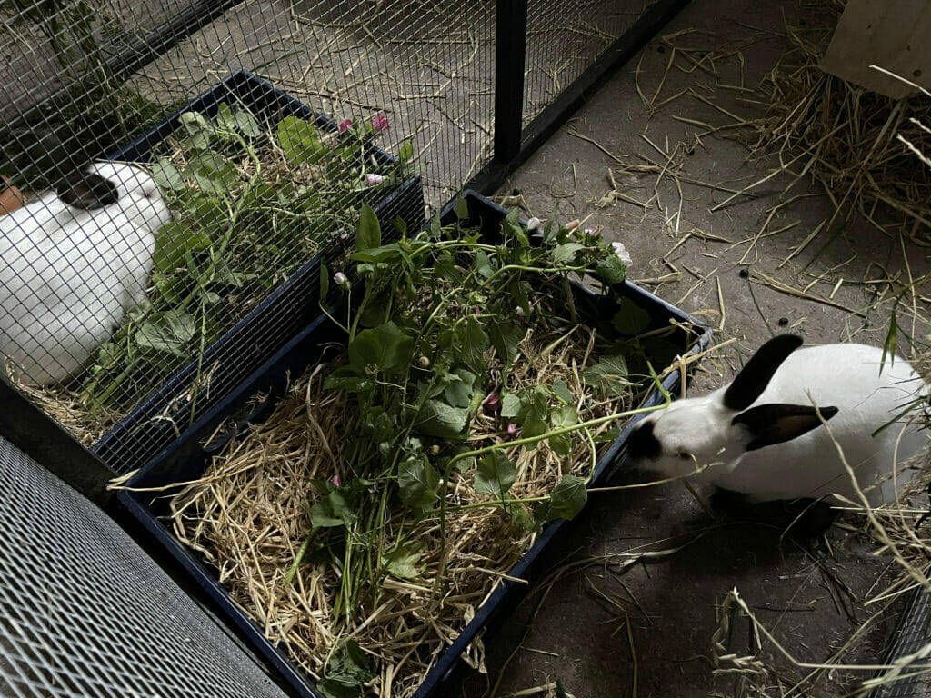 hjemmelavet kanin mad kaninfoder