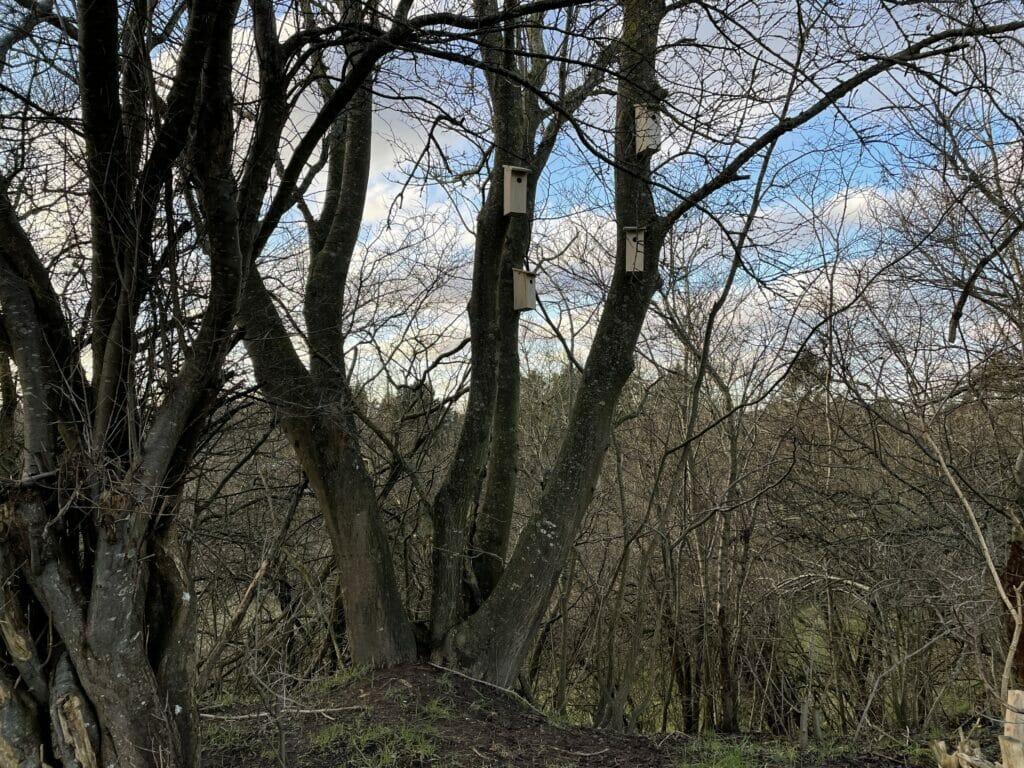 redekasser fuglekasser i træ opsætning montering højde