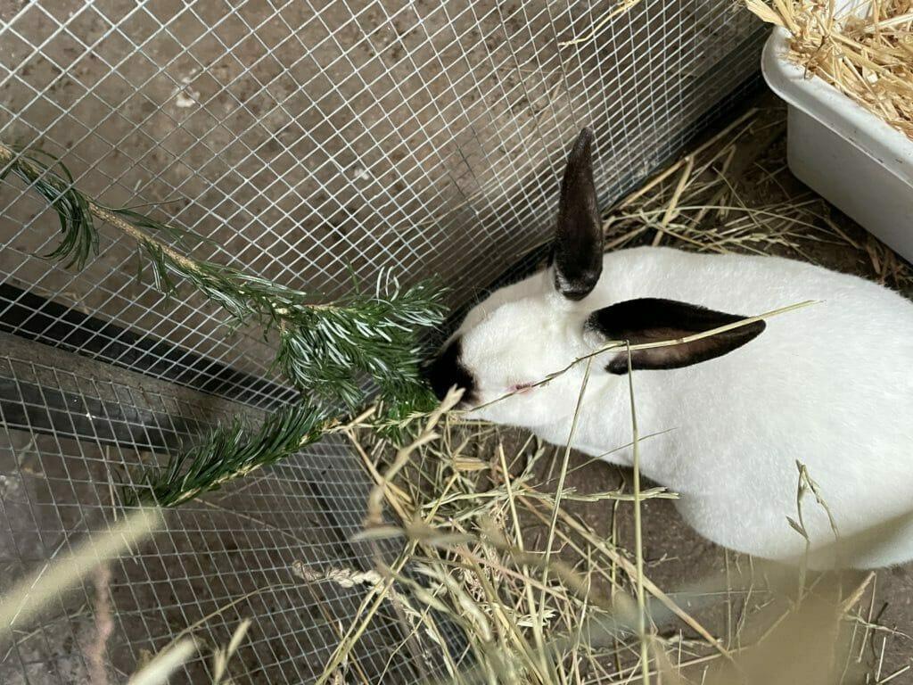 vinterfoder til kaniner fuldfoder kanin mad hjemmelavet kaninfoder