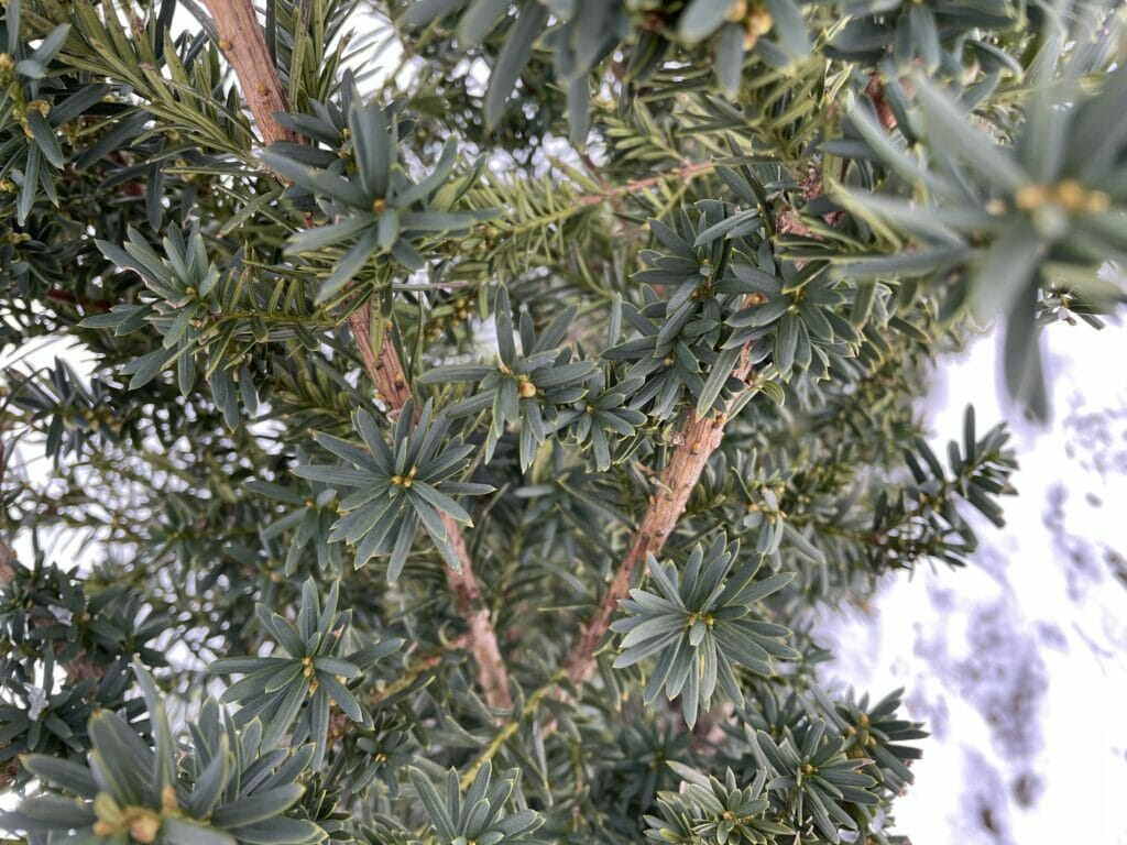 grøn taks smuk takshæk gødning