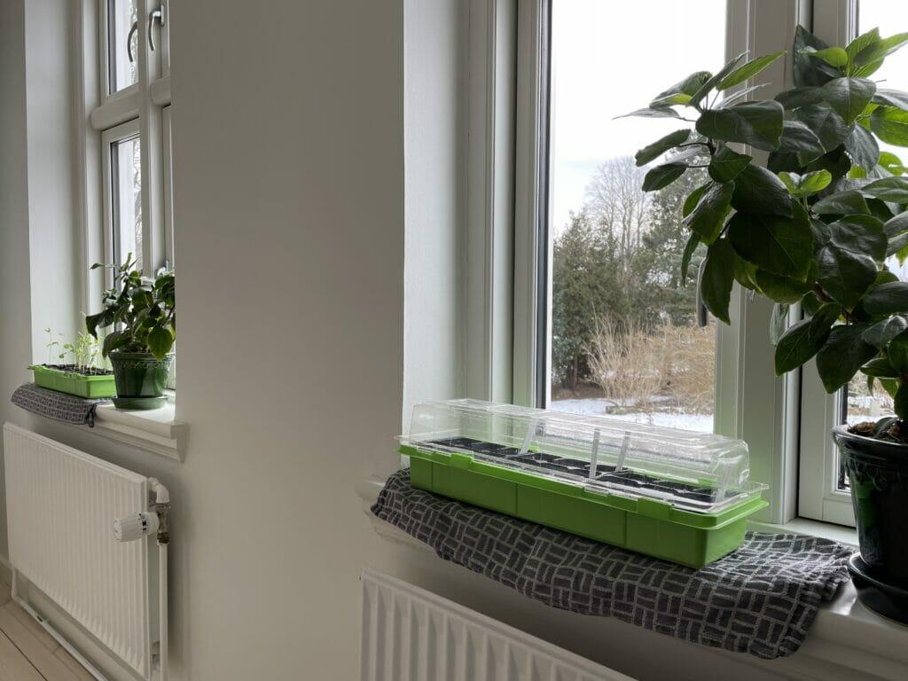 forspiring dyrkning vindue indendørs vindueskarm