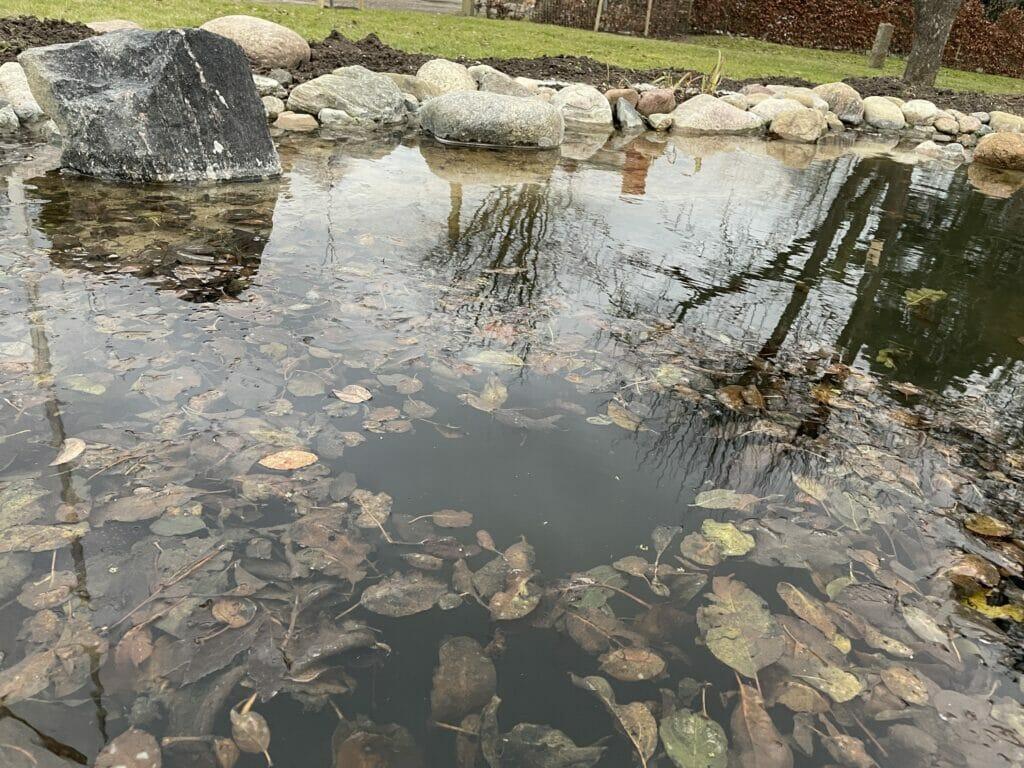 rengøring af havedam havebassin sø