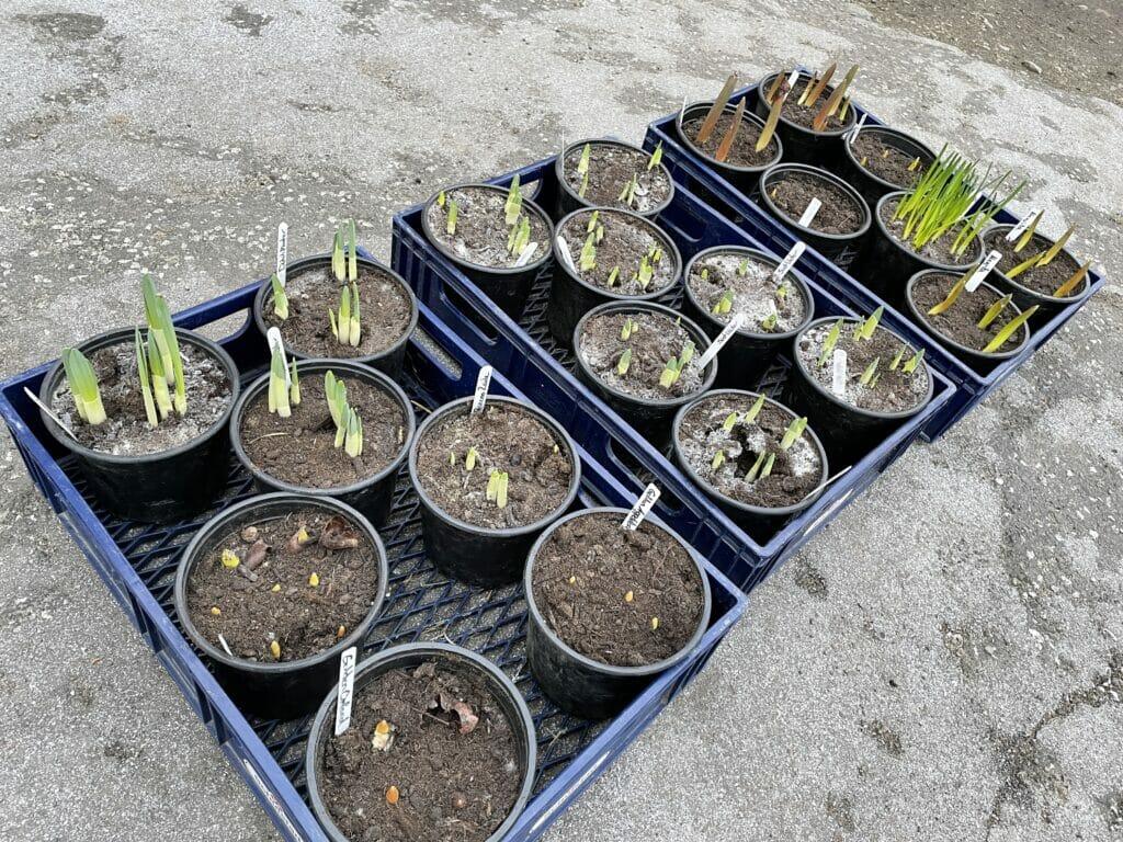 skærehave skærehaven dyrkning af blomster til buketter
