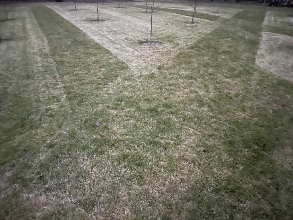 græs græsklipning blomstereng blomstermark