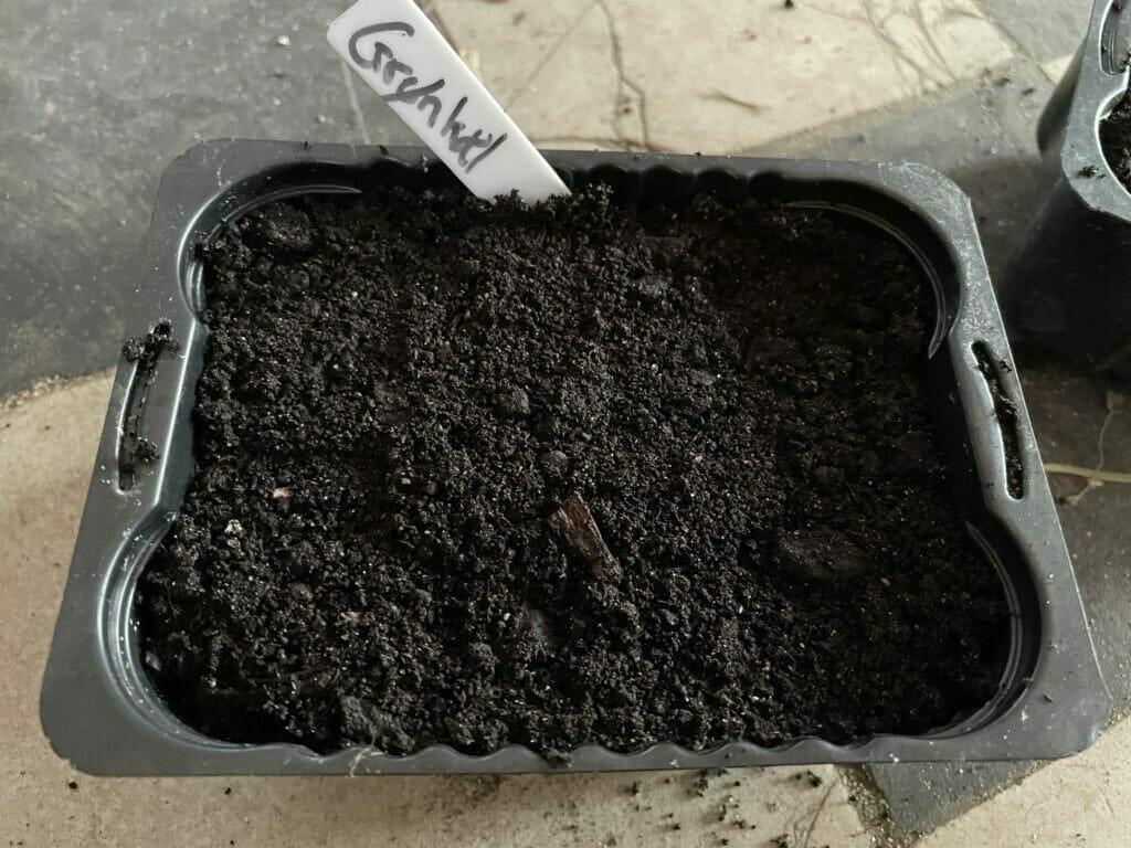 såning af kål palmekål grønkål