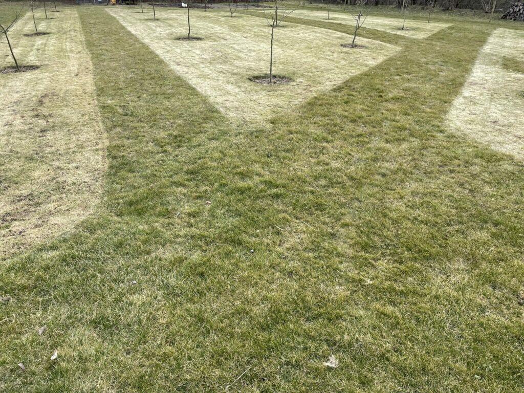 blomstereng klargøring anlæg på græs