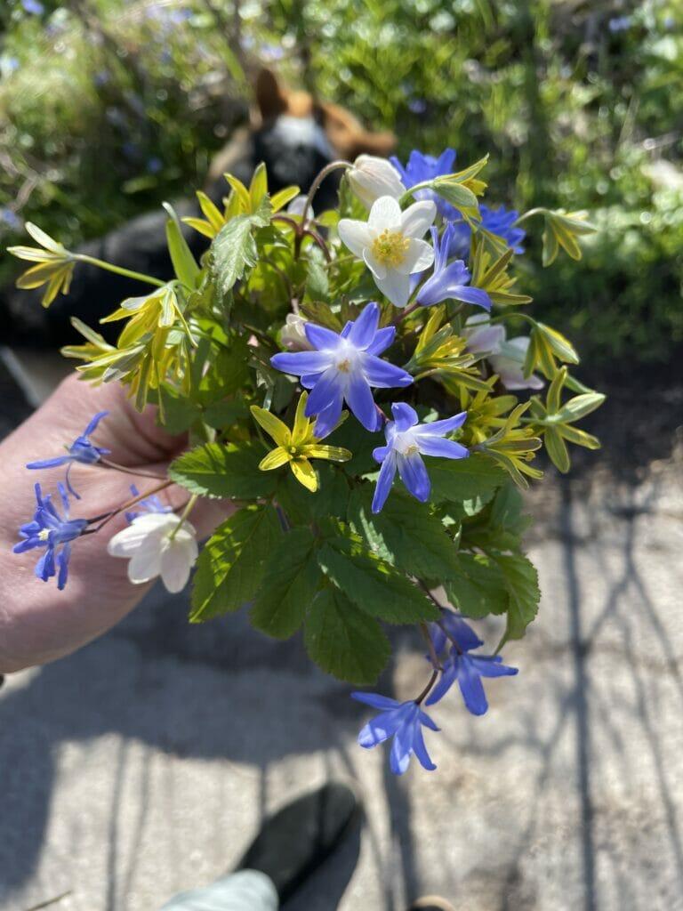 vild blomster vilde buket anemoner