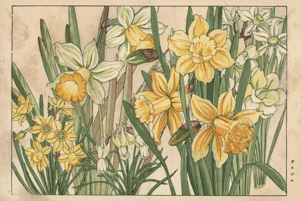påskelilje påskeliljer maleri