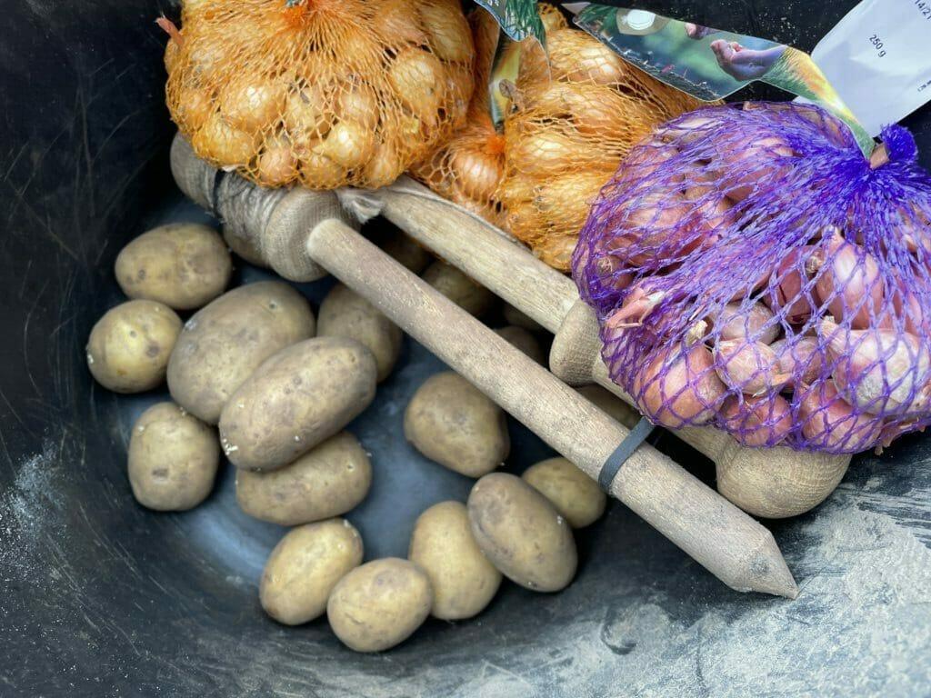 kartofler løg dyrkning