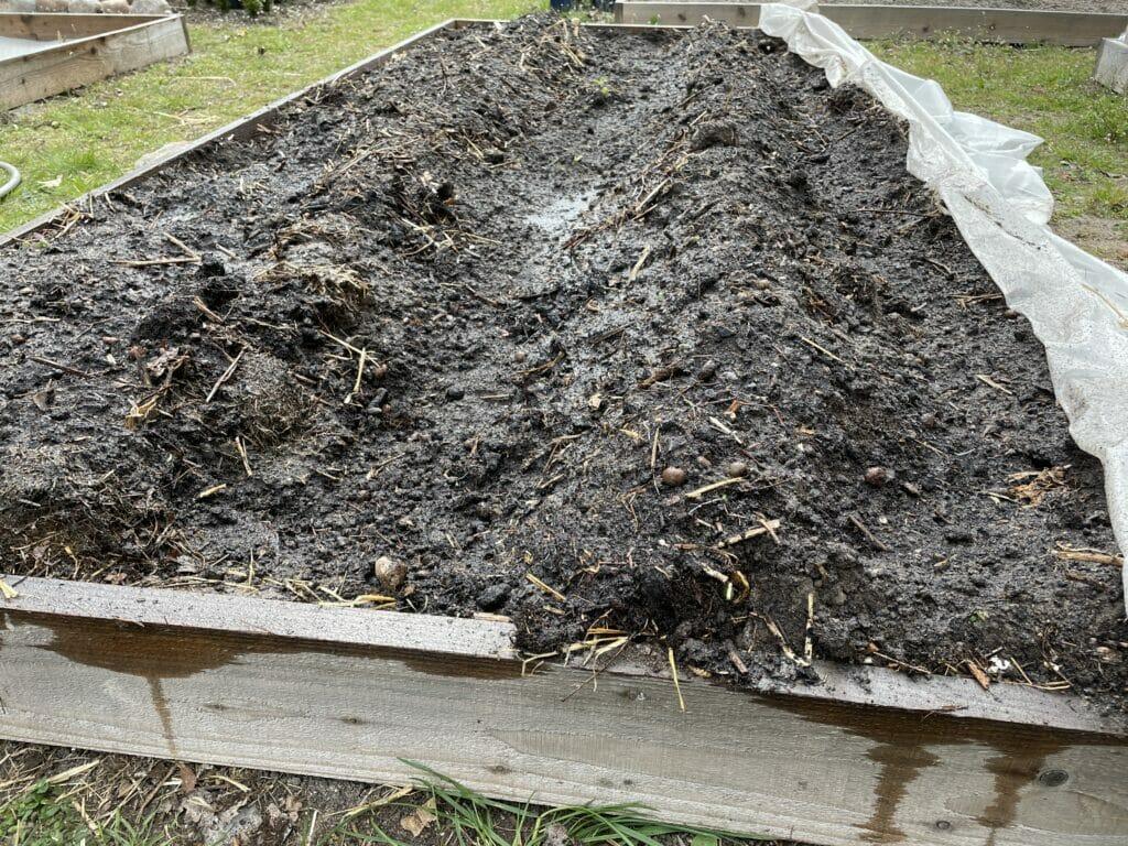 hypning af kartofler tidlige fiberdug grøntsager fra haven