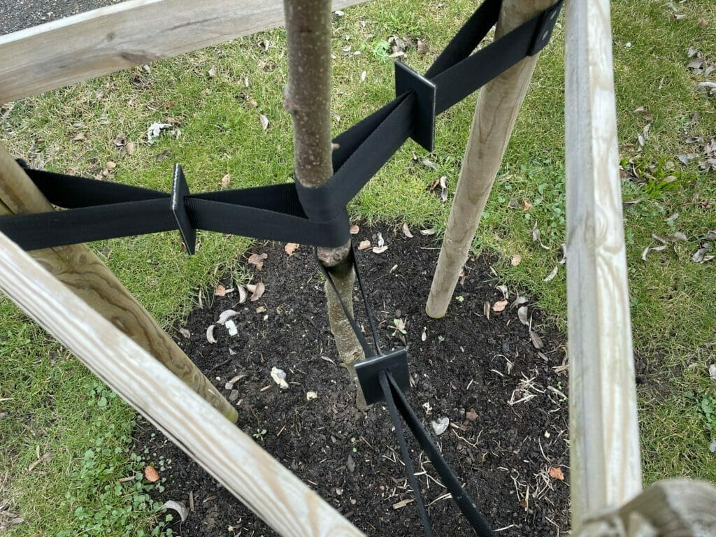 støtte opbinding træer strammer