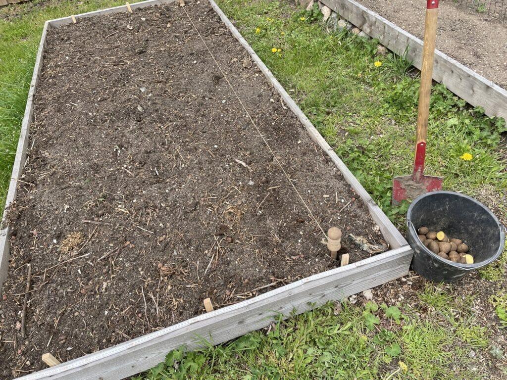 forberedelse dyrkning kartofler klargøring jord