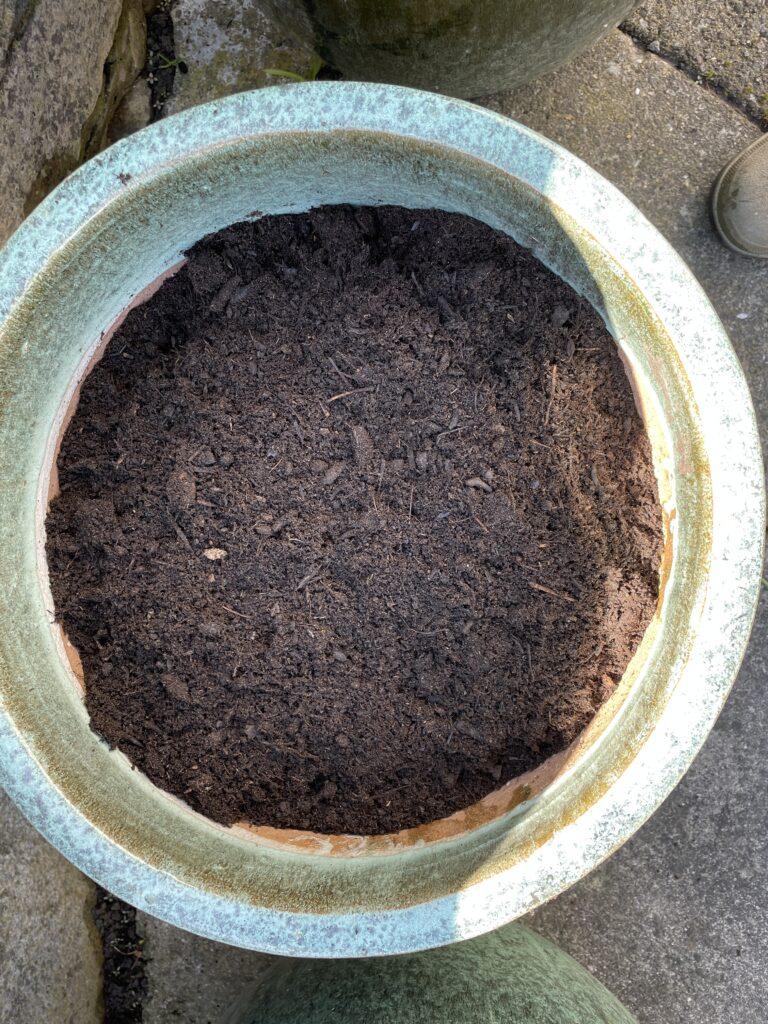 plantning georgin krukke