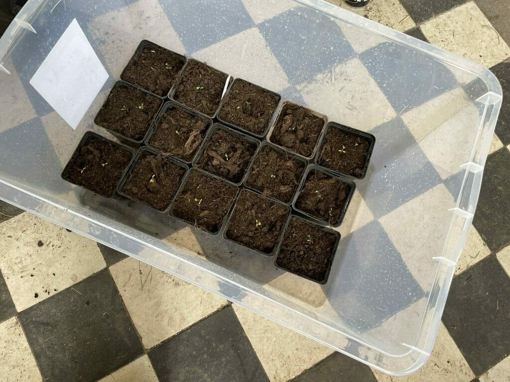 forspiring minidrivhus dyrkning udplantning væksthus